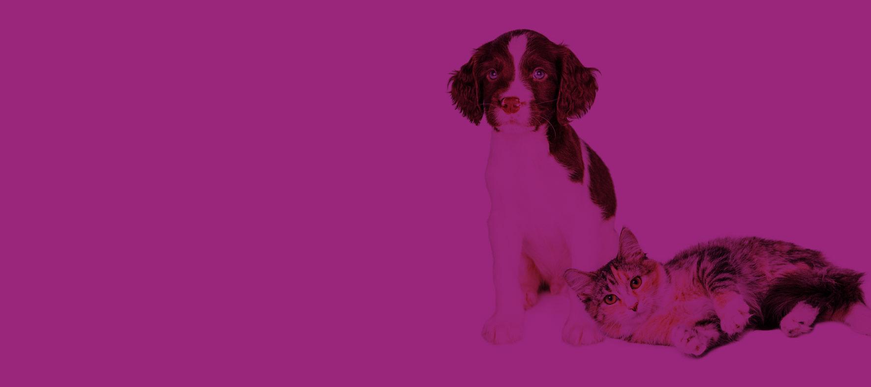 alimentation chien Chateau-Gontier