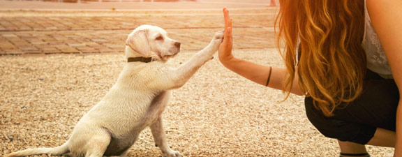 éducateur chien Chateaubriant