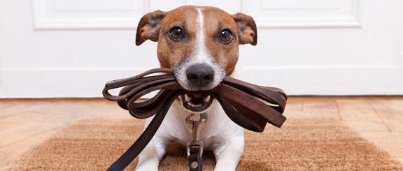 éducateur chien Vitré